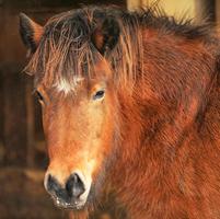 Pferd auf Paulas Bauernhof