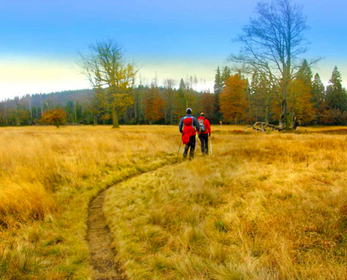 Zwei Menschen wandern im herbstlichen Gras und neben bunten Baeumen